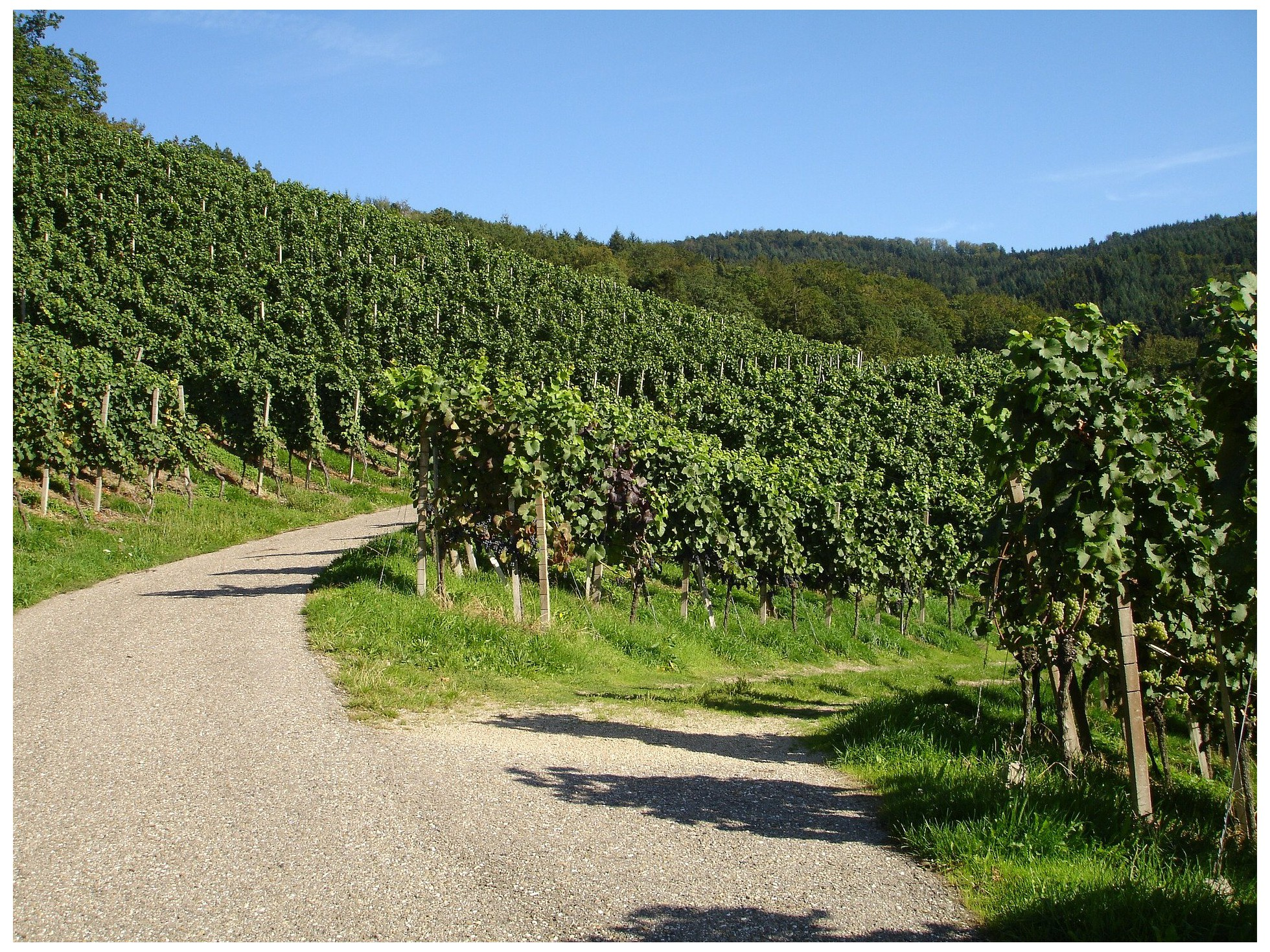 Les villages incontournables pour déguster les meilleurs vins alsaciens
